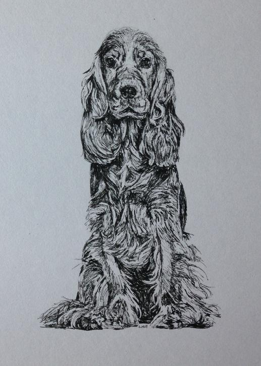 Cocker Spaniel pen and ink drawing