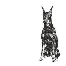 Doberman Pinscher black and white, pen and ink, print by Louisa Hill Artist