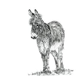 Donkey black and white, pen and ink, print by Louisa Hill Artist