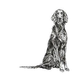 English Setter black and white, pen and ink, print by Louisa Hill Artist