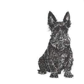 Scottish Terrier black and white, pen and ink, print by Louisa Hill Artist