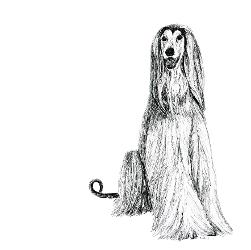 Afghan Hound black and white, pen and ink, print by Louisa Hill Artist