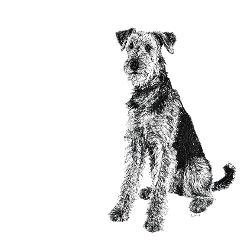 Airedale Terrier black and white, pen and ink, print by Louisa Hill Artist