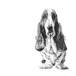 Basset Hound black and white, pen and ink, print by Louisa Hill Artist