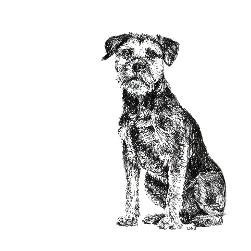 Border Terrier black and white, pen and ink, print by Louisa Hill Artist