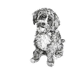 Cavapoo black and white, pen and ink, print by Louisa Hill Artist