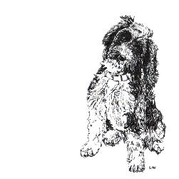 Cockapoo black and white, pen and ink, print by Louisa Hill Artist