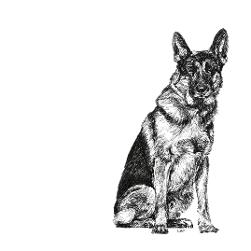 German Shepherd black and white, pen and ink, print by Louisa Hill Artist