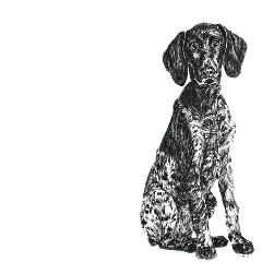 German Short Haired Pointer black and white, pen and ink, print by Louisa Hill Artist