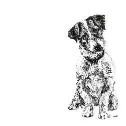 Jack Russell Terrier black and white, pen and ink, print by Louisa Hill Artist