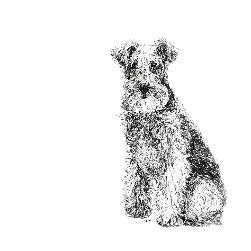 Lakeland Terrier black and white, pen and ink, print by Louisa Hill Artist