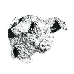 Piglet black and white, pen and ink, print by Louisa Hill Artist