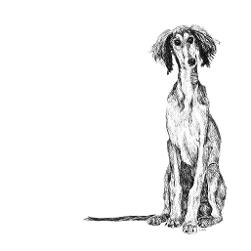 Saluki black and white, pen and ink, print by Louisa Hill Artist