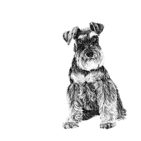 Schnauzer black and white, pen and ink, print by Louisa Hill Artist