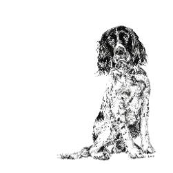 Springer Spaniel black and white, pen and ink, print by Louisa Hill Artist