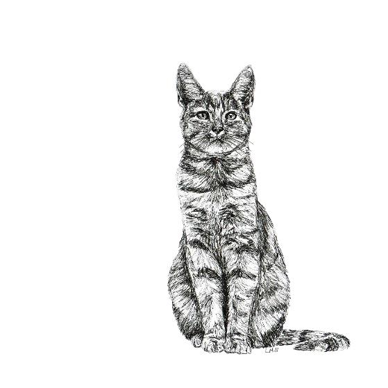 Tabby black and white, pen and ink, print by Louisa Hill Artist