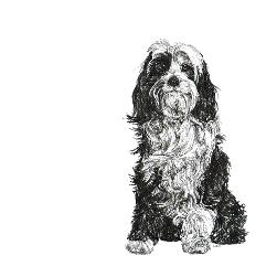 Tibetan Terrier black and white, pen and ink, print by Louisa Hill Artist
