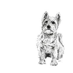 West Highland Terrier Westie black and white, pen and ink, print by Louisa Hill Artist